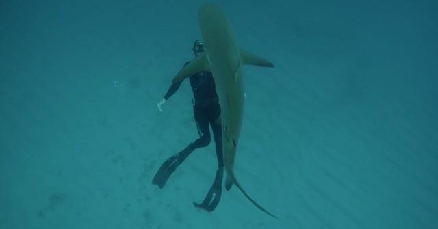 """Nik Linder berichtet: """"Freediving  mit Haien auf den Bahamas"""""""