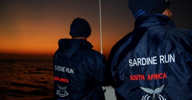 Andreas Schumacher berichtet vom Sardine Run vor Südafrika