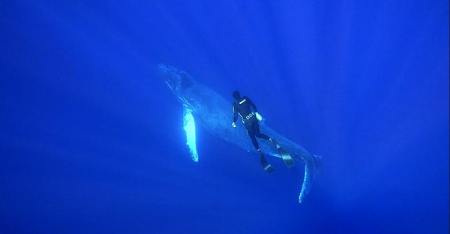 Nik Linder auf Tuchfühlung mit einem Buckelwal – Freediving vor Socorro
