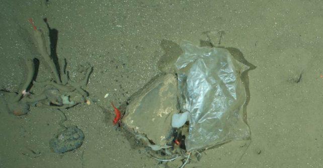 Müll im Meer: weltweit 1220 Arten betroffen
