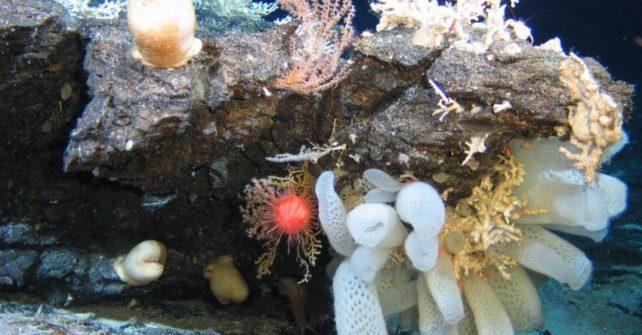 Tiefseebergbau bedroht einzigartige Lebensräume