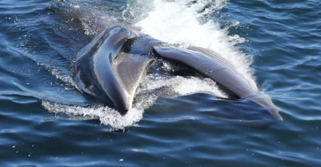 Japan darf weiter mit bedrohten Walen handeln