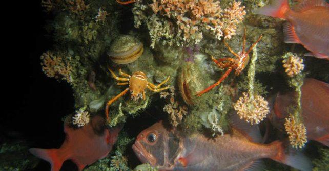 Gigantisches Kaltwasserkorallen-Gebirge unter Wasser