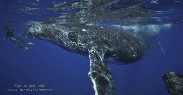 … Spaß mit Walen – Peter Schneiders Blog Teil II