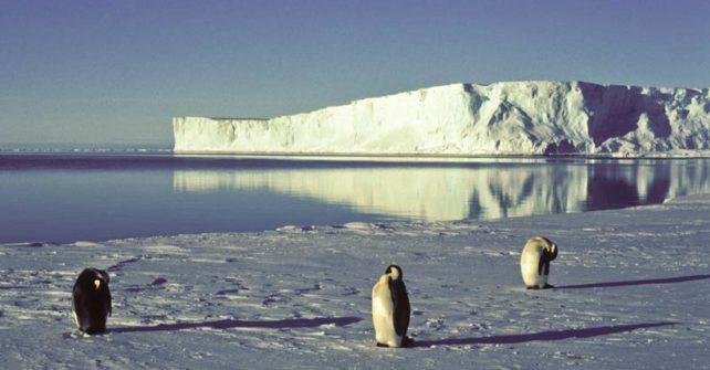 Im Wedellmeer soll das größte Meeresschutzgebiet der Welt ausgewiesen werden