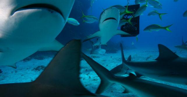 Freitauchen mit Haien – ein ganz besonderes Erlebnis